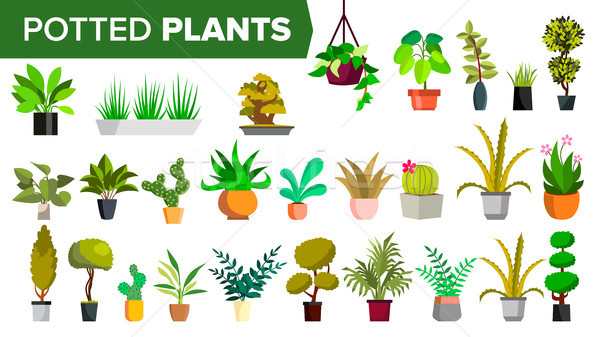 Potted Plants Set Vector. Green Color Plants In Pot. Indoor Home, Office Modern Houseplants. Various Stock photo © pikepicture
