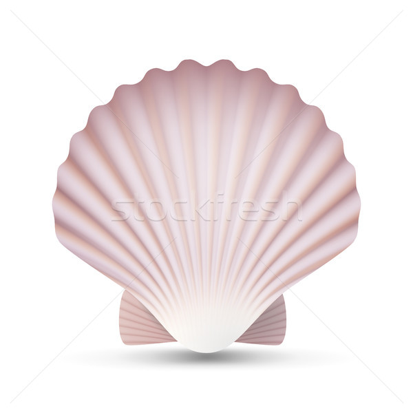 Scallop Seashell Vector. Ocean Mollusk Sea Shell Close Up. Isolated. Illustration Stock photo © pikepicture