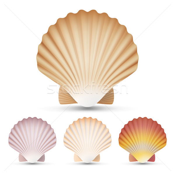 Scallop Seashell Set Vector. Exotic Souvenir Scallops Shell Isolated On White Background Illustratio Stock photo © pikepicture