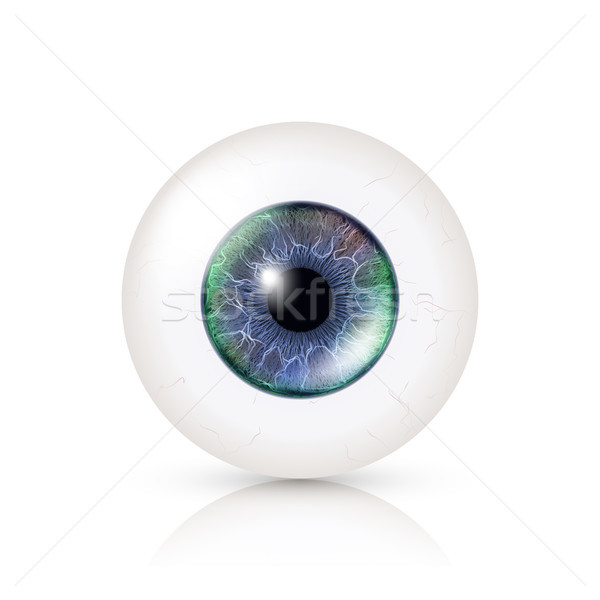 Realistic Human Eyeball. 3d Glossy Photorealistic Eye Detail With Shadow And Reflection. Isolated On Stock photo © pikepicture