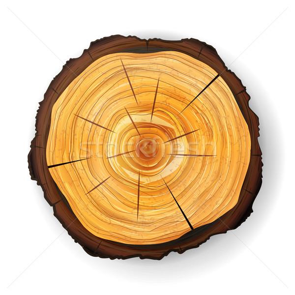 Seção transversal árvore vetor cortar Foto stock © pikepicture