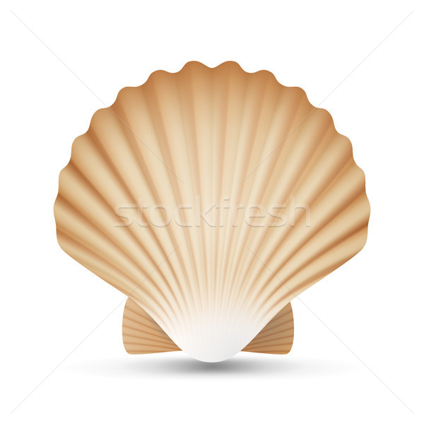 Scallop Seashell Vector. Realistic Sea Shell Close Up. Isolated On White. Illustration Stock photo © pikepicture
