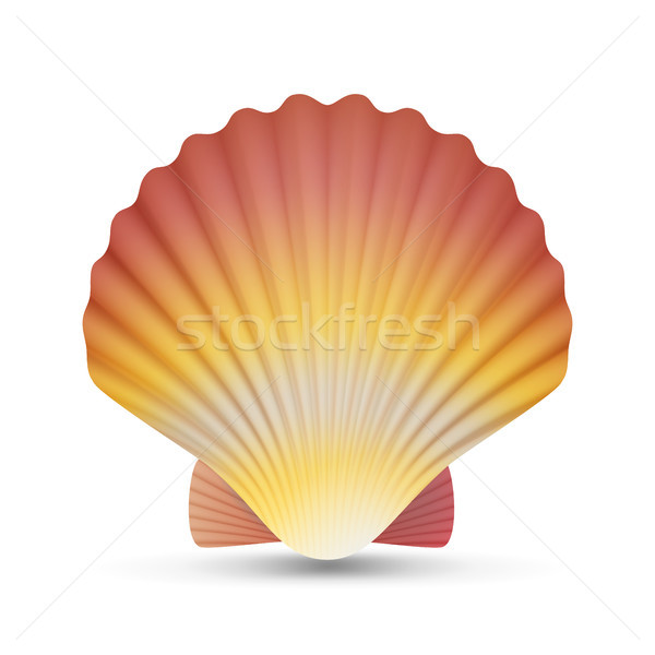 Scallop Seashell Vector. Realistic Scallops Shell Isolated On White Background Illustration Stock photo © pikepicture