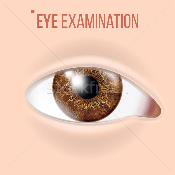 Human Eye Vector. Vision Concept. Clinic Medical Eye Diagnostic. Realistic Detail Illustration Stock photo © pikepicture