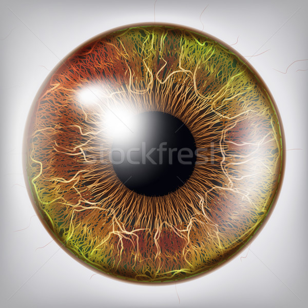 Eye Iris Vector. Vision Medical Concept Illustration Stock photo © pikepicture