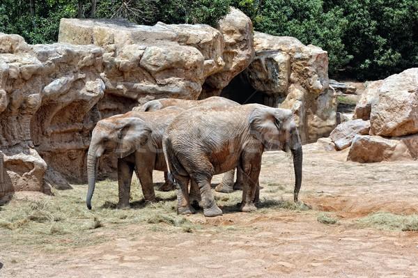 アフリカ カップル 自然 環境 バイオ ストックフォト © Pilgrimego