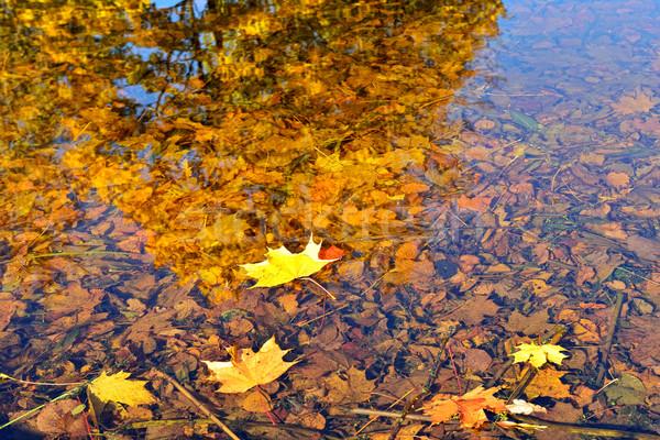 Autumn maple leaves fallen in the water. Stock photo © Pilgrimego