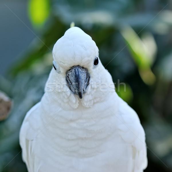 頭 白 おうむ 虹 動物 オウム ストックフォト © Pilgrimego