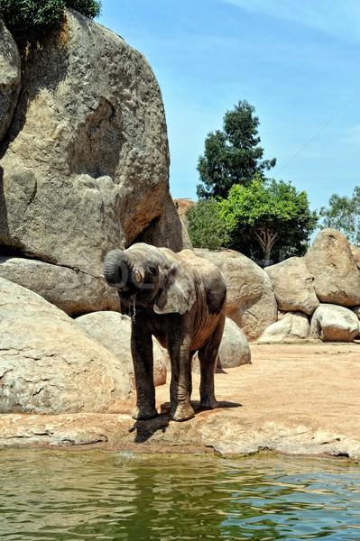 Stok fotoğraf: Afrika · fil · doğal · çevre · biyo · park · Valencia