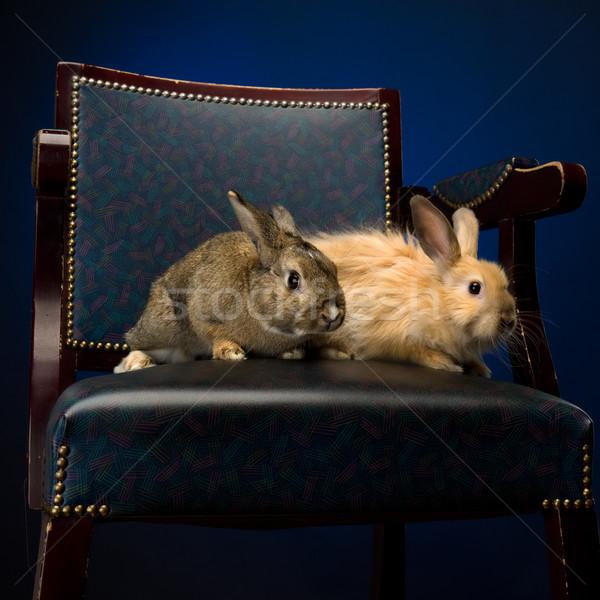 Rabbit on the chair Stock photo © Pilgrimego