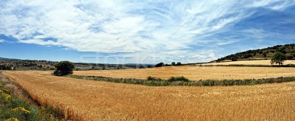 Stok fotoğraf: Buğday · alanları · dağlar · gün · batımı · İspanya
