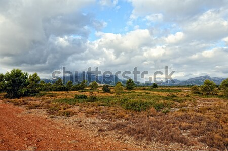 Suumer landscape with rural road in Spain. Stock photo © Pilgrimego