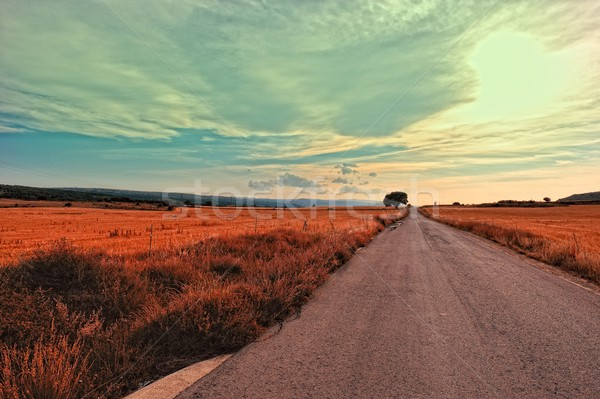 Landscape with rural road in Spain. Stock photo © Pilgrimego