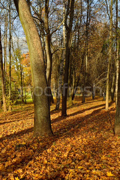 Napos ősz erdő levelek napos idő idő Stock fotó © Pilgrimego