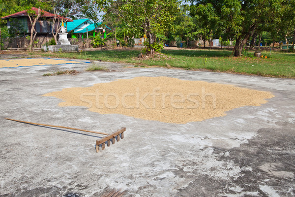 Paddy husk drying to reduce humidity Stock photo © pinkblue