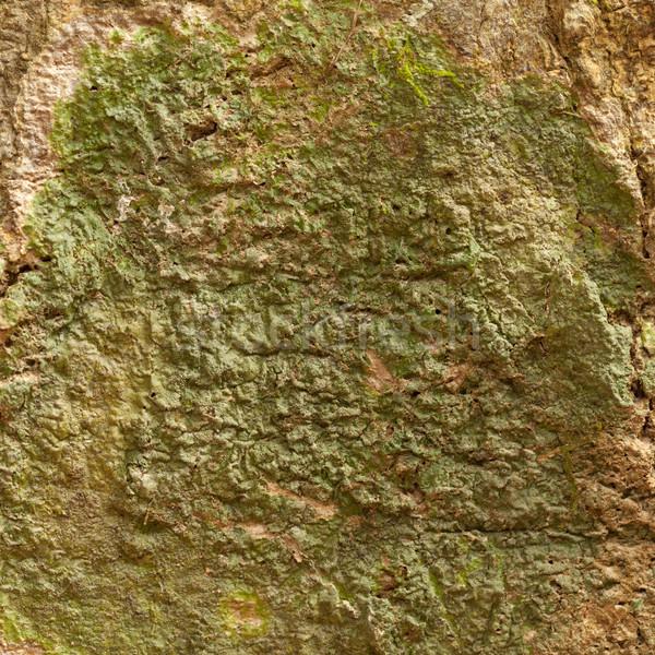 Fa ugatás textúra fal természet terv Stock fotó © pinkblue