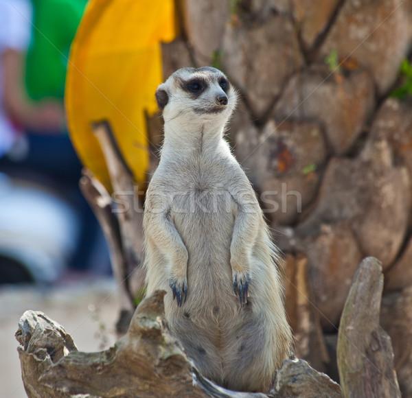 Ogen woestijn moeder mond mannelijke afrikaanse Stockfoto © pinkblue