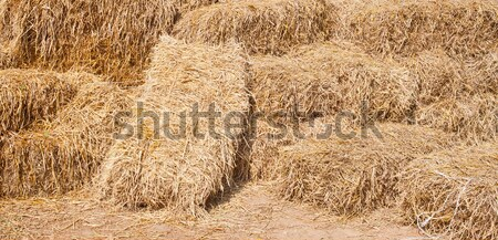 Pile of rice straw Stock photo © pinkblue