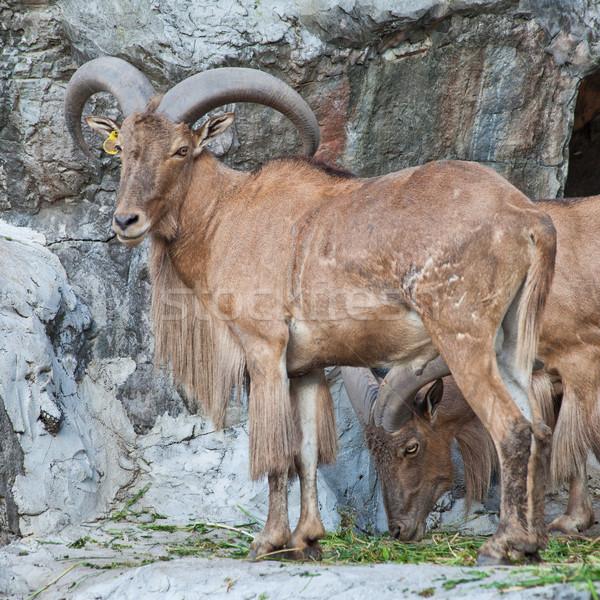 Stock fotó: Birka · kő · Afrika · park · állat · környezet