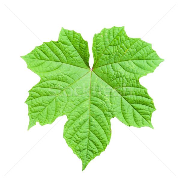 Zöld levél izolált fehér tavasz absztrakt természet Stock fotó © pinkblue