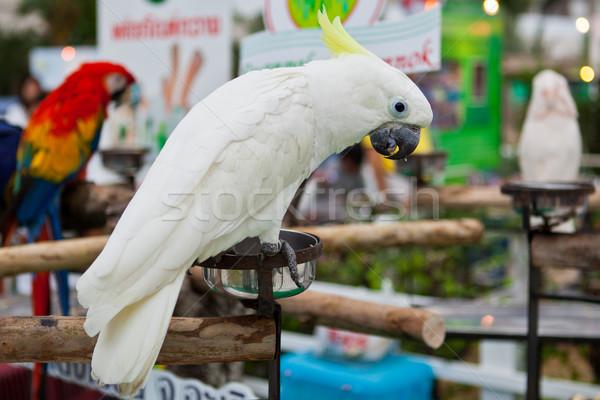 Kakadu erdő toll portré szín fehér Stock fotó © pinkblue