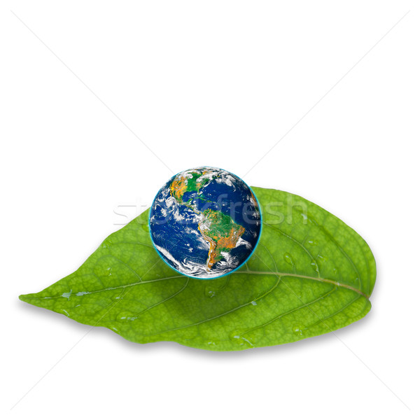 Planet earth on green leaf isolated on white background Stock photo © pinkblue