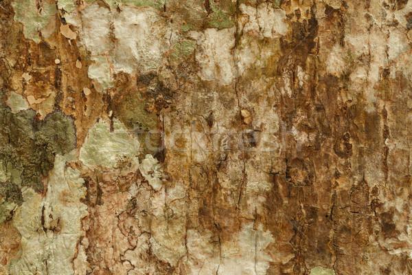 Baum Rinde Textur Wand Natur Design Stock foto © pinkblue