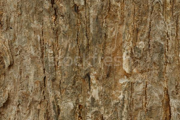 Arbre écorce texture mur nature design Photo stock © pinkblue
