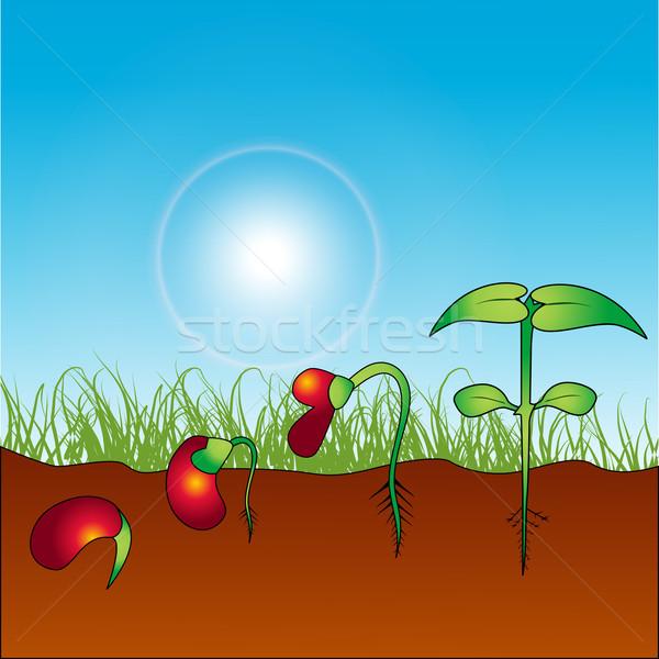 growing plant Stock photo © Pinnacleanimates