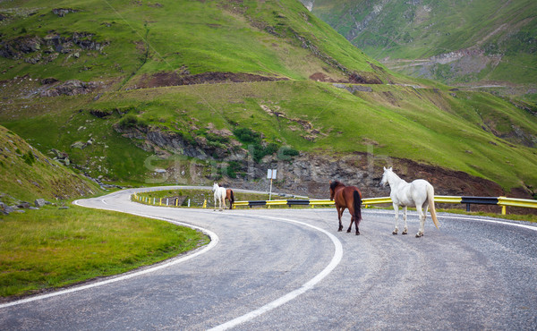 White and brown horses walking on Transfagarasan highway in Roma Stock photo © pixachi