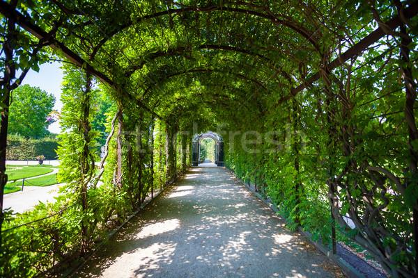Photo stock: Vert · naturelles · tunnel · arbre · amour · nature