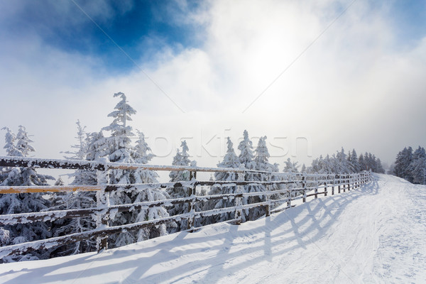Winter trees and wooden fence covered in snow that borders a mou Stock photo © pixachi