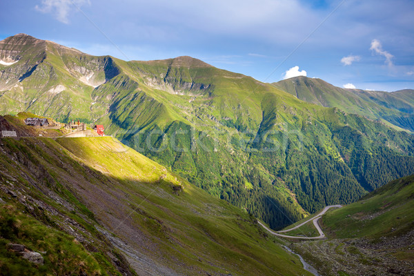 Transfagarasan mountain road with wild flowers from Romania Stock photo © pixachi