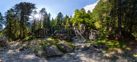 Panoramic view inside a forest from Mount Bucegi on summer Stock photo © pixachi