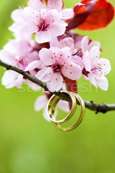 Photo stock: Alliances · rose · pomme · fleur · mariage