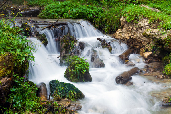 Forest stream surrounded by vegetation running over rocks Stock photo © pixachi