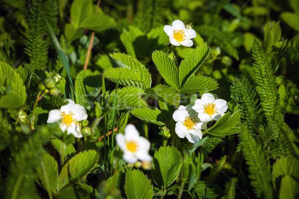 Kleurrijk tulpen park voorjaar outdoor landschap Stockfoto © pixachi