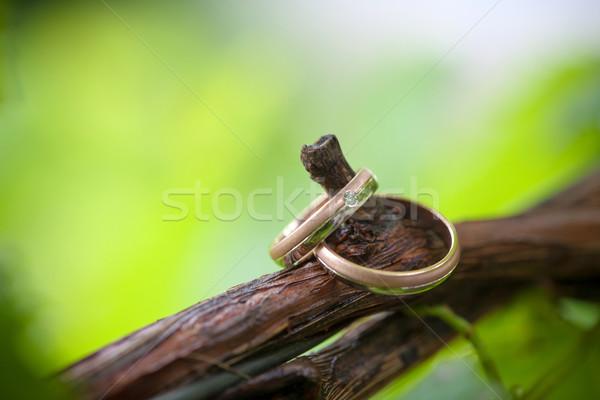 Deux alliances vigne branche floue arbre Photo stock © pixachi