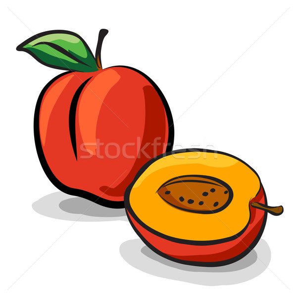 Peach fruits sketch drawing vector set Stock photo © pixachi
