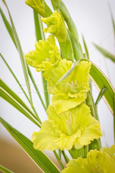 Blumen grünen Wiese Blume Garten Hintergrund Stock foto © pixachi