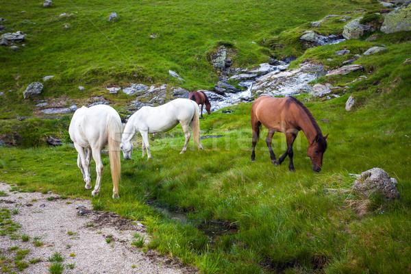 White and brown horses feeding near a water spring on Fagaras mo Stock photo © pixachi