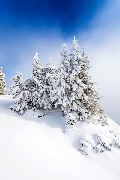 Pine bos gedekt sneeuw winterseizoen boom Stockfoto © pixachi