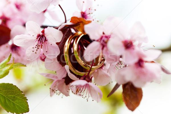 Jegygyűrűk közelkép rózsaszín alma virágok virág Stock fotó © pixachi