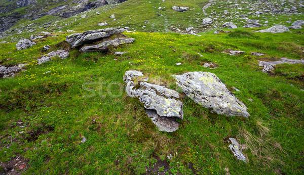 Herbe verte fleurs jaunes montagne pierres fleurs texture Photo stock © pixachi