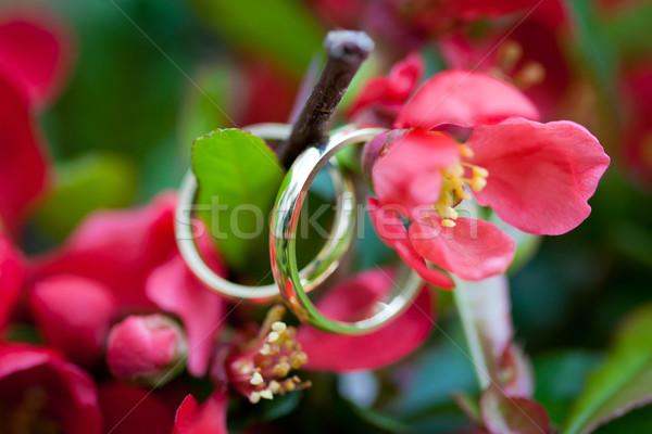 Trouwringen Rood bloem schoonheid Stockfoto © pixachi