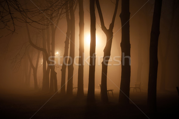 Foggy park alley with benches and trees silhoettes on night Stock photo © pixachi