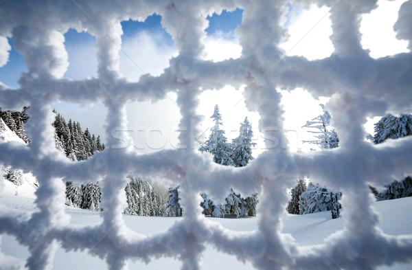 Pinho floresta coberto neve congelada cerca Foto stock © pixachi