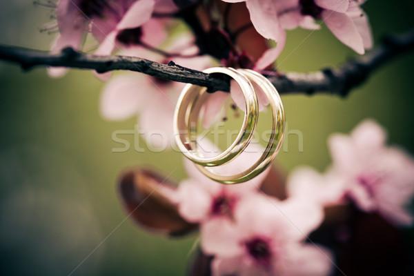 обручальными кольцами розовый Вишневое цветы свадьба Сток-фото © pixachi