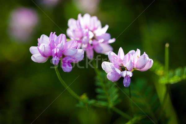 Frühlingsblumen Blumen Gras Landschaft Stock foto © pixachi