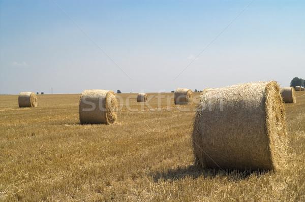 тюк соломы природы лет области облаке Сток-фото © pixelman